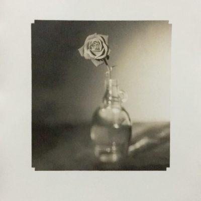 Fine Art, Hand Printed, Silver Gelatin, Alan Falzon, Fibre Paper, Flower, Delicate, Rose
